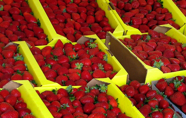 Because they are grown close to the ground and have no protective outer layer, strawberries often contain a fair amount of pesticide residue.