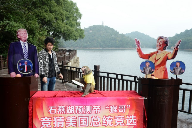 A monkey in Hunan province, China, correctly chose Donald Trump as the winner of the 2016 Presidential election.