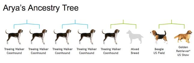 A breakdown of Arya's breeds