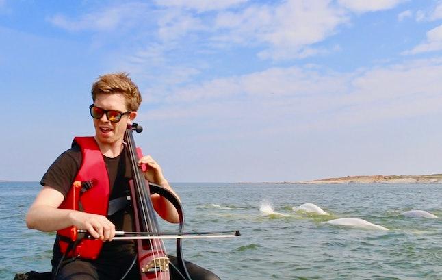 Rob Knaggs playing cello — with several beluga bumps behind him.