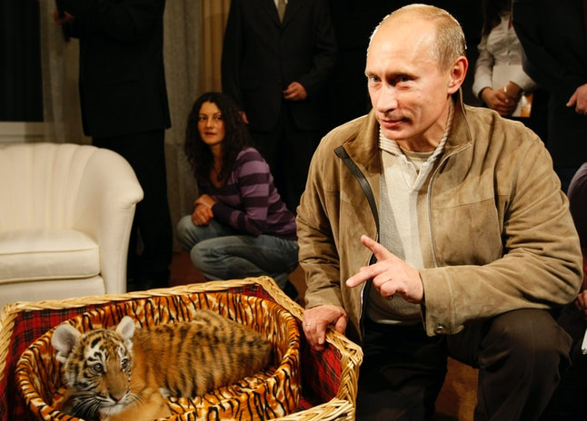 Putin received a tiger for his 56th birthday.