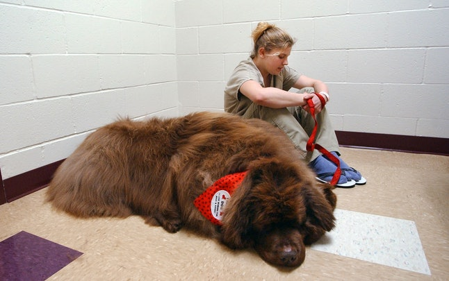 Therapy dog visiting prison in Vancouver, Washington.