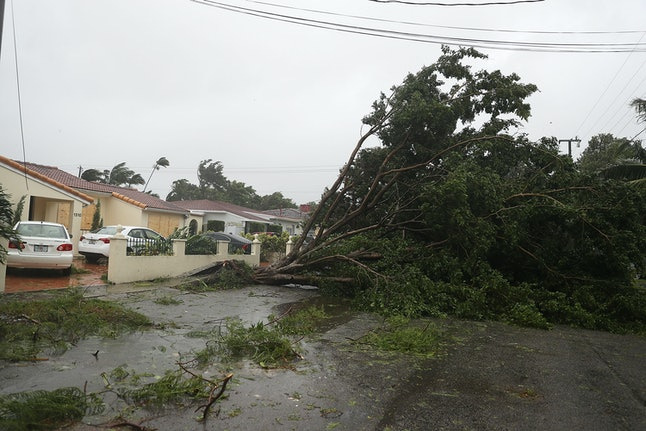 Trees and branches are seen after being knocked down by the high winds as Hurricane Irma arrives in Florida on Sunday.