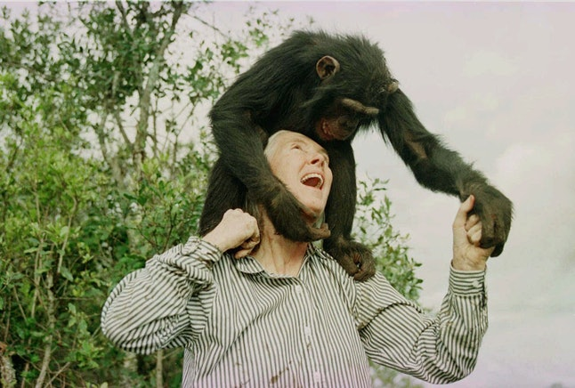 Jane Goodall at a chimpanzee sanctuary in 1997