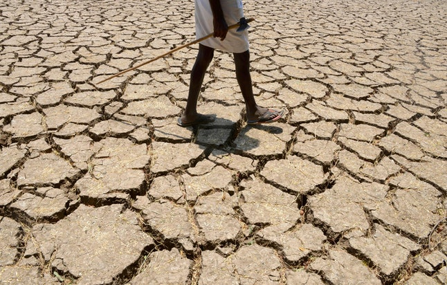 A farmer walks over his dried-up cotton farm in India