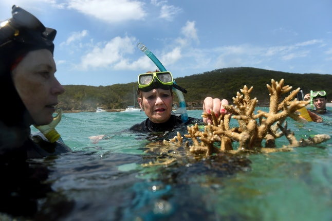 Australian marine biologist Alison Jones displays a piece of coral from the Great Barrier Reef.