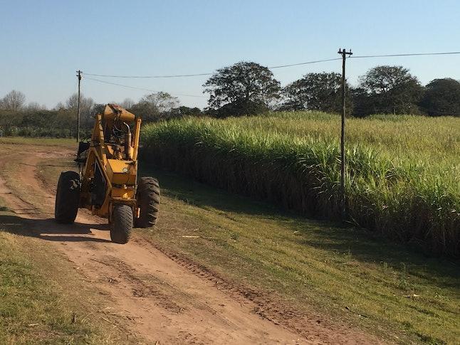 A sugar cane farm