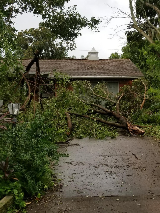 The hurricane was mild enough in parts of Eastern Florida for people to go outside and take pictures of the storm, with most of the damage limited to fallen trees.