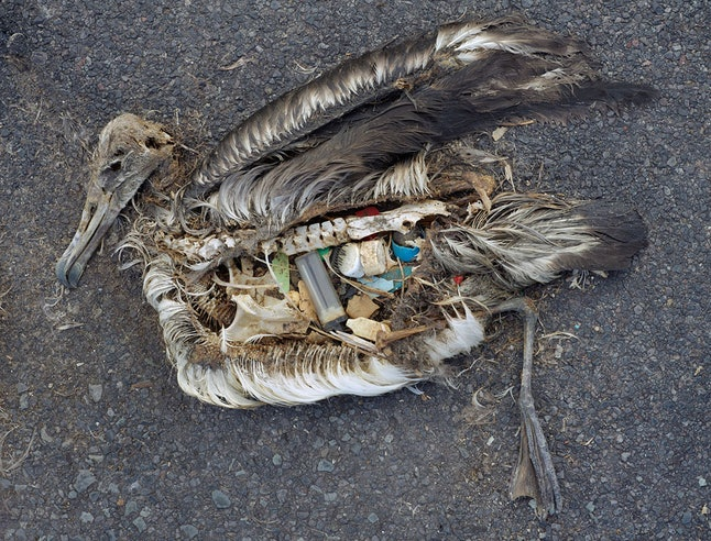 An artist's work stylizing the amount of plastic a bird might consume.