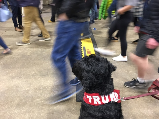 A Trump fan's dog takes in the action at a Denver campaign event.