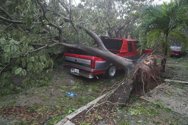 A tree is seen toppled onto a pickup truck after being knocked down by Hurricane Irma's powerful winds.