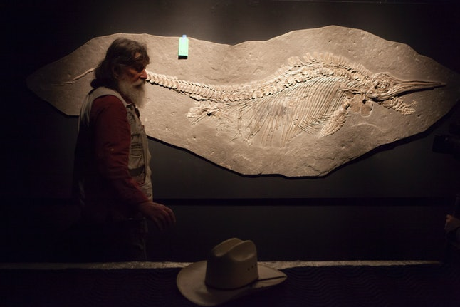 Another species of ichthyosaur on display at the Houston Museum of Natural Science