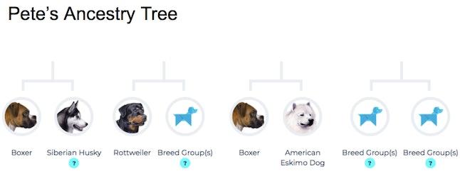 A breakdown of Pete's breeds