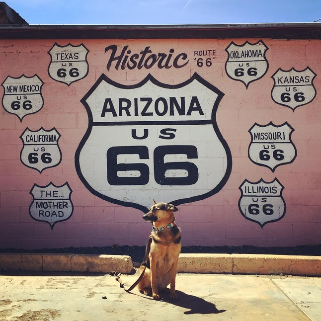 Sophie poses patiently in Arizona.