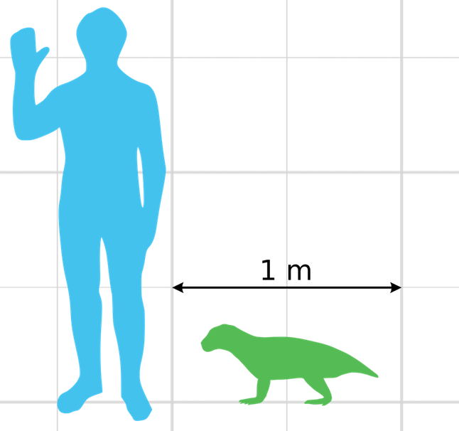 Compare a small herbivore croc called Simosuchus to the size of a modern human.