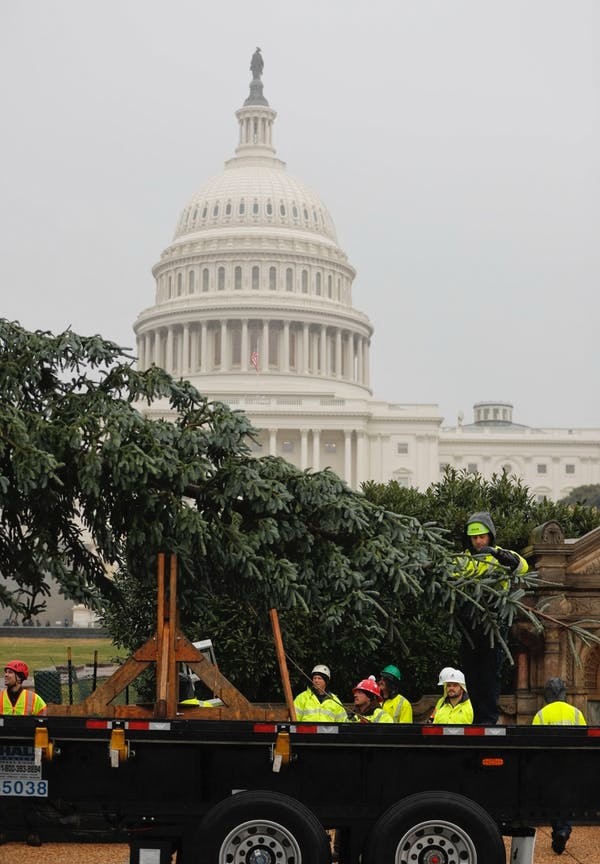 Workers deliver the 2018 U.S. Capitol Christmas Tree to the U.S. Capitol Building, Nov. 26, 2018, from Willamette National Forest in Oregon