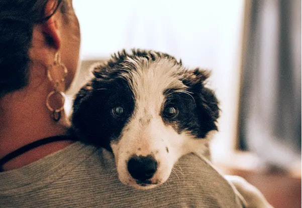 Alleviating pet anxiety is about changing the owner's behavior, too.
