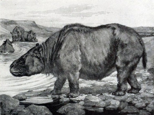 Megaherbivores like the toxodon were the avocado's best friend.