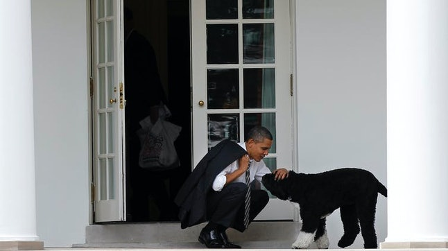 President Barack Obama takes a break outside the Oval Office with Bo in 2012.
