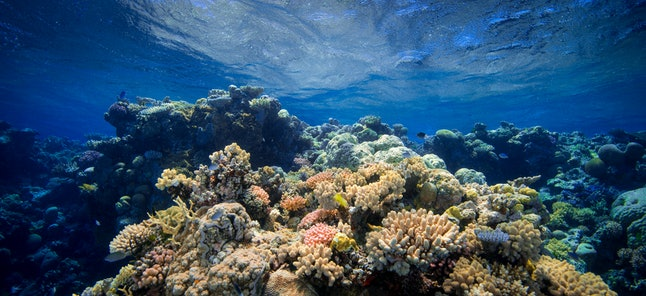 Coral Barrier Reef