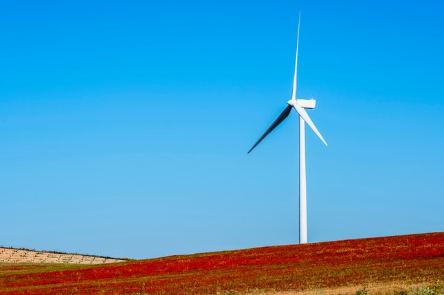 Wind turbine on hillside in a field of red poppies (Papaver rhoeas) Almargen, Malaga, Andalucia, Spain