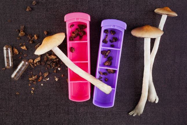 Fresh and dried psychedelic mushrooms in gel caps and pill box. Alternative medicine. Microdosing. Matural drepression remedy