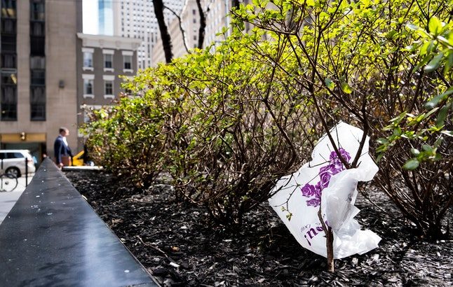 A plastic bag is seen caught in a bush in New York, New York, USA, 02 April 2019. The New York State legislature passed a bill as part of the most recent budget that would ban single use plastic bags in New York State beginning next year for environmental reasons.