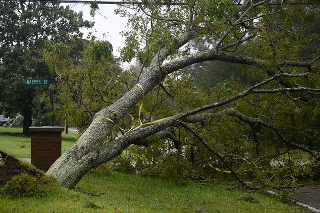 A tree is toppled from high winds and rain of Hurricane Dorian on James Island, S.C., on